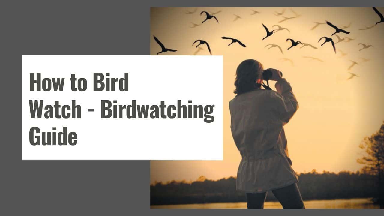 How to Bird Watch – Birdwatching Guide