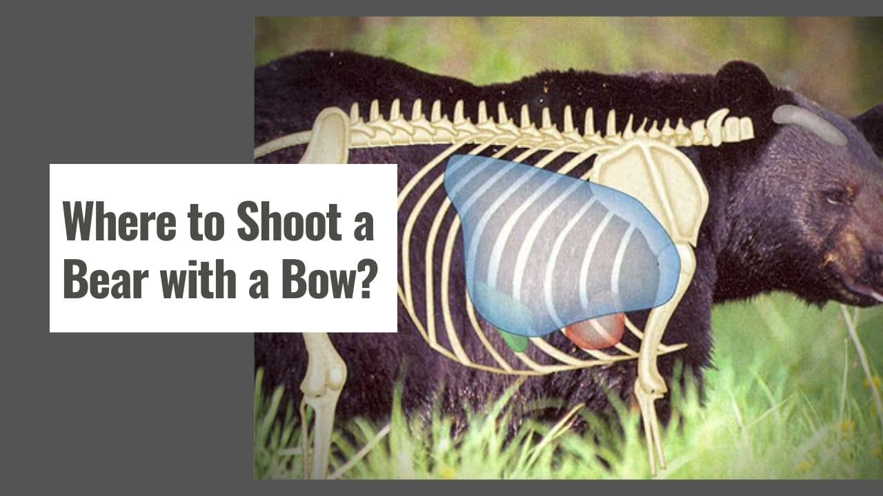 Where to Shoot a Bear with a Bow?